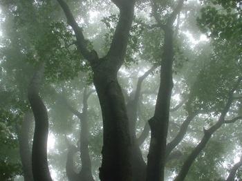 霧の丹沢-1.jpg