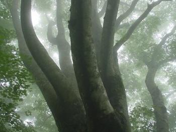 霧の丹沢-2.jpg