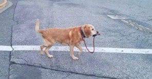 自分からつながれに行く犬もおりオバマさまからトランプさまへ.jpg